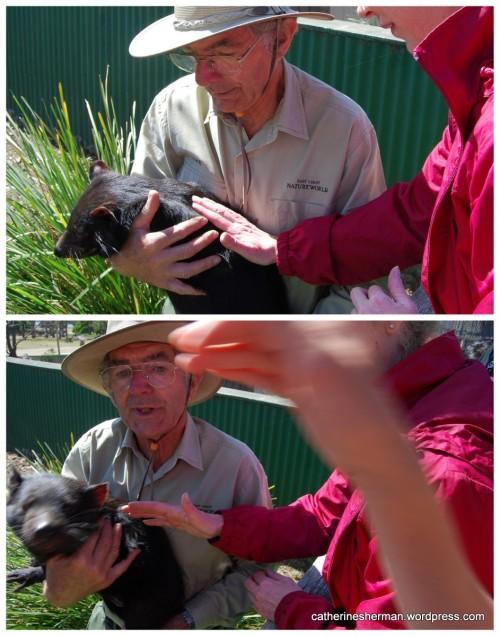Petting a Tasmanian Devil