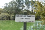 Alligators are Dangerous!