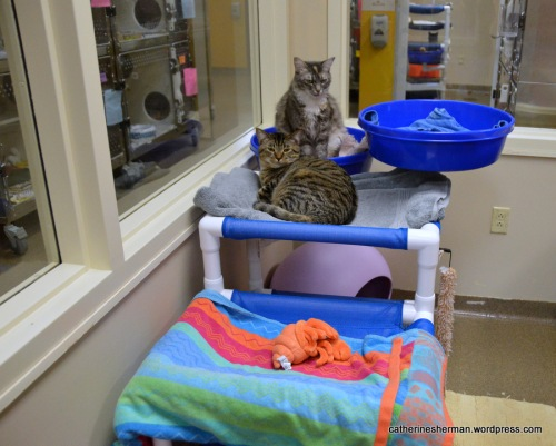 This animal shelter room, enjoyed by two cats, is furnished with many towels to make it very comfy.